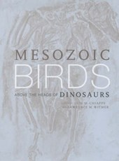 Mesozoic Birds