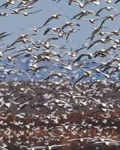 Seagulls Aloft Blank Book Lined Journal (8x10)