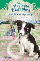Evie, de snoezige puppy