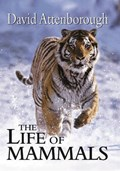 The Life of Mammals   David Attenborough  