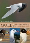 Gulls of the World   Klaus Malling Olsen  