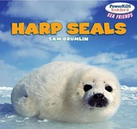 Harp Seals   Sam Drumlin  