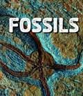 Fossils   Ava Sawyer  