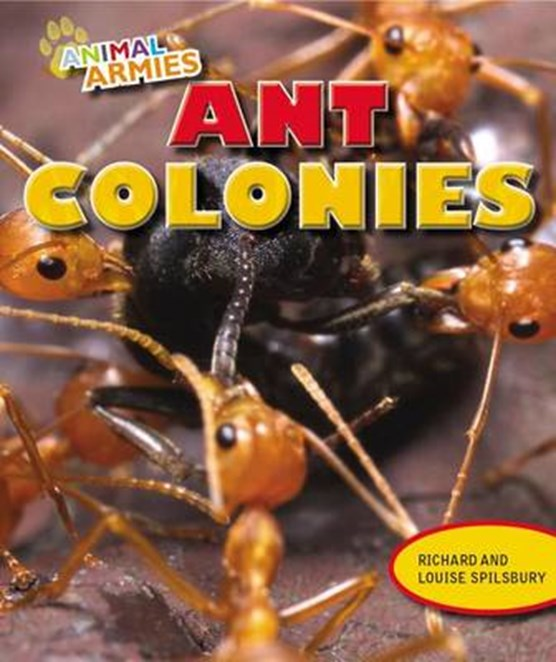 Ant Colonies