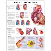 Heart Conditions | auteur onbekend |