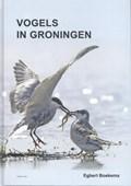 Vogels in Groningen | Egbert Boekema |