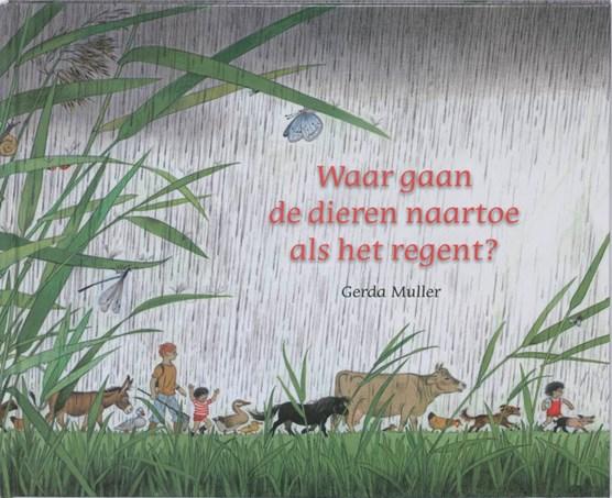 Waar gaan de dieren naartoe als het regent?