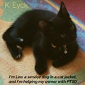 I'm Leo, a service dog in a cat jacket, and I'm helping my owner with PTSD | K. Eyck |