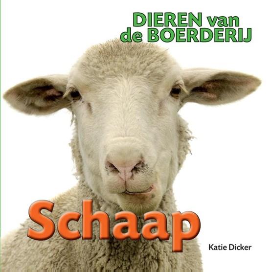 Schaap